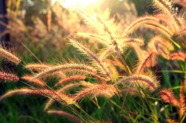Blumen bei sonnenaufgang ein neuer tag