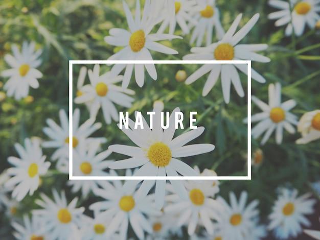 Blumen blühen natur frischekonzept