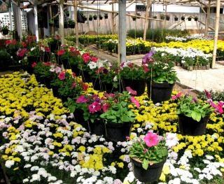 Blumen, blüten, pflanzen, gelb