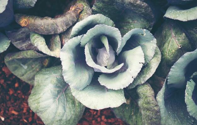 Blumen für die dekoration