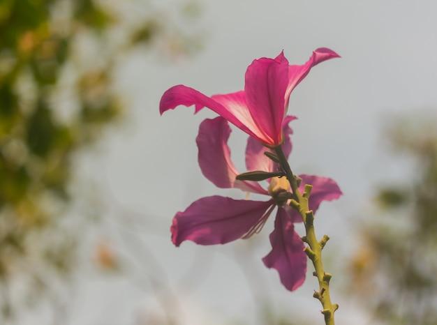 Blumen für einen frischen und reinen tag der liebe.