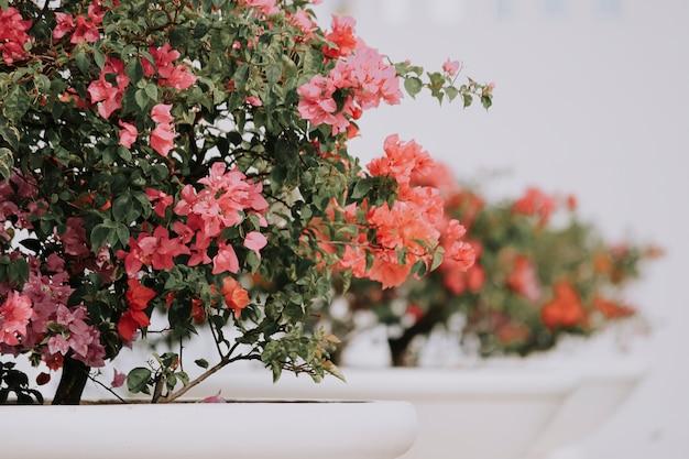 Blumen für grafikdesignhintergrund