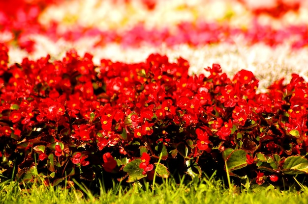 Blumen ganz nah
