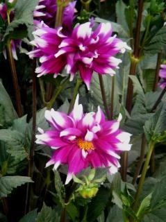 Blumen Geburtstag Download Der Kostenlosen Fotos