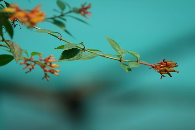 Blumen geschlossen auf dem ast eines baumes