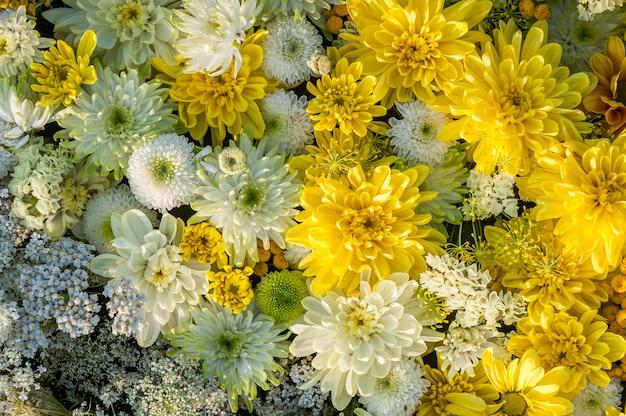 Blumen hintergrund. gelbe und weiße chrysanthemenblumen. ansicht von oben. feiertagshintergrund.
