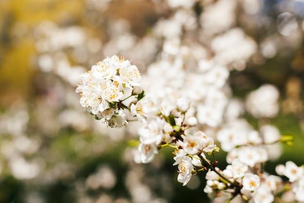 Blumen im freien