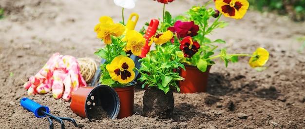 Blumen im garten pflanzen. selektiver fokus natur.