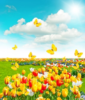 Blumen im grünen gras. frühlingslandschaft mit schmetterlingen und sonnigem blauem himmel
