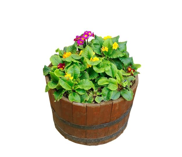 Blumen im holztopf