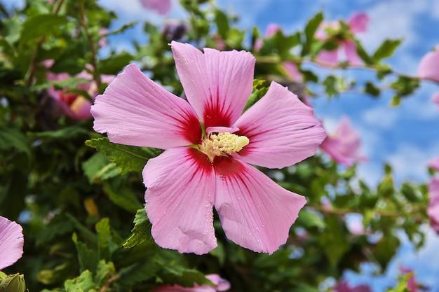 Blumen in baku-stadt, aserbaidschan