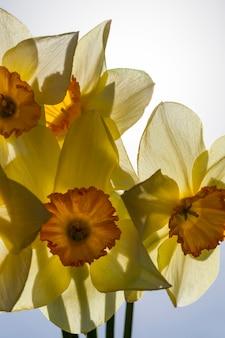 Blumen in der frühlingssaison, blumen werden für die landschaftsgestaltung angebaut