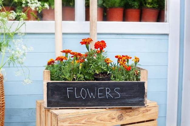 Blumen in der holzkiste an der straße in der nähe des blumenladens blühende orangefarbene tagetes-blumen im topf auf der veranda