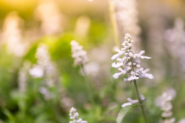 Blumen in der natur
