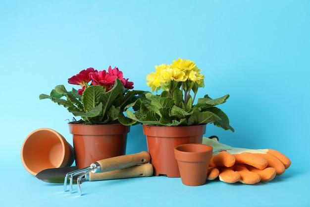 Blumen in töpfen und gartenwerkzeugen auf blauem hintergrund, platz für text