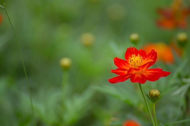 Blumen in vielen farben im garten.
