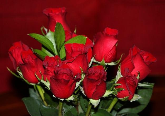 Blumen rosaceae blumen rosen mehrjährige