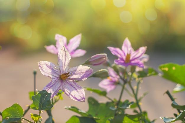 Blumen schön mit sonnenlicht mit unschärfehintergrund