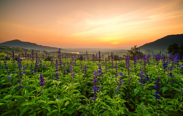 Blumen tulpe lila und die schöne landschaft. mit dem licht der sonne.