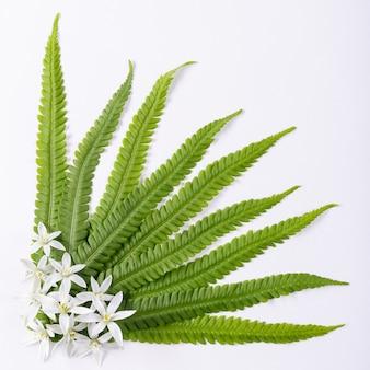 Blumen und blätter auf weißem hintergrund aus nächster nähe fotografiert