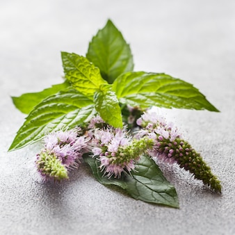 Blumen und blätter der frischen minze auf einer grauen tabelle. tiefenschärfe