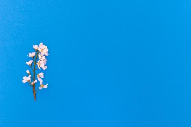 Blumen und blätter der vogelkirsche auf einem blauen hintergrund.