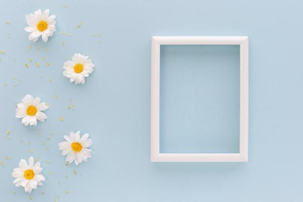 Blumen und blütenstaub des weißen gänseblümchens nahe leerem bilderrahmen auf blauem hintergrund