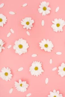 Blumen und blumenblätter des weißen gänseblümchens der draufsicht