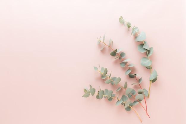 Blumen und eukaaliptus zusammensetzung. muster aus verschiedenen bunten blumen auf weißem hintergrund.