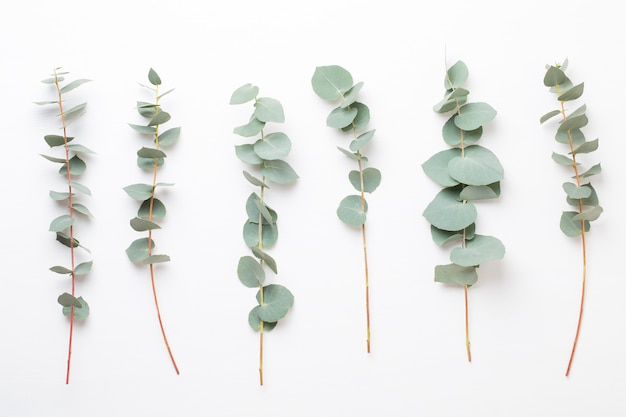 Blumen und eukaaliptus zusammensetzung. muster aus verschiedenen bunten blumen ..
