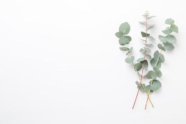 Blumen und eukalyptus