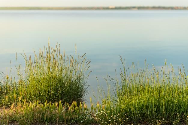 Blumen und gras am see mit geringer schärfentiefe