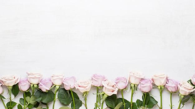 Blumen valentinstag grußkarte. rahmen aus rosa rose auf grauem hintergrund. flache lage, draufsicht, kopierraum.