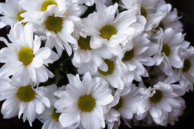 Blumen weiß getrimmte nahaufnahme von oben