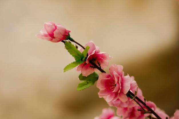 Blumen werden verwendet, um den garten zu schmücken.