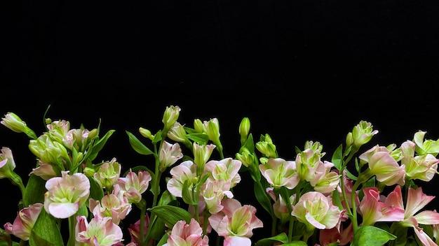 Blumen zusammensetzung. rahmen aus rosa blumen alstroemeria auf schwarzem hintergrund. hochzeitstag, muttertag und frauentag-konzept. flache lage, ansicht von oben.