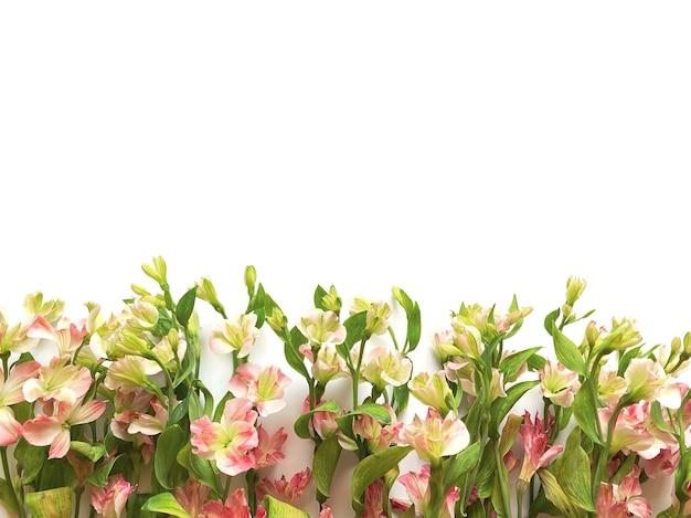 Blumen zusammensetzung. rahmen aus rosa blumen alstroemeria auf weißem hintergrund. hochzeitstag, muttertag und frauentagkonzept. flache lage, ansicht von oben.