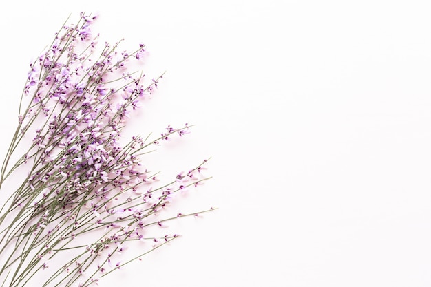 Blumen zusammensetzung. rosa blumen auf rosa hintergrund. ostern, frühlingskonzept. grußkarte, flache lage, ansicht von oben.