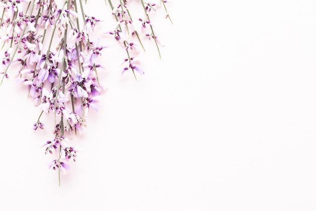 Blumen zusammensetzung. rosa blumen auf rosa hintergrund. ostern, frühlingskonzept. grußkarte, flachlage, draufsicht.