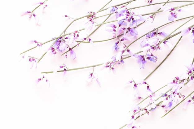 Blumen zusammensetzung. rosa blumen auf rosa hintergrund. ostern, frühlingskonzept.