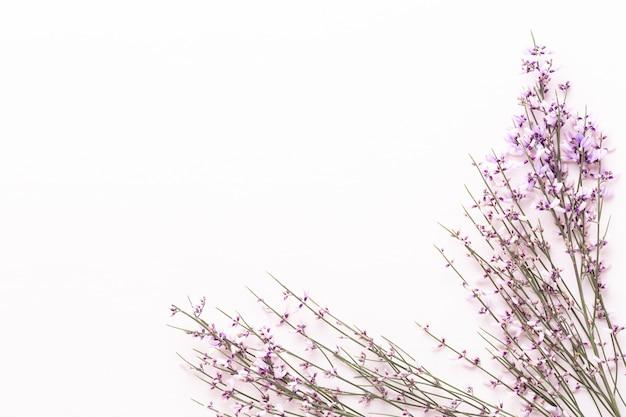 Blumen zusammensetzung. rosa blumen auf rosa hintergrund.