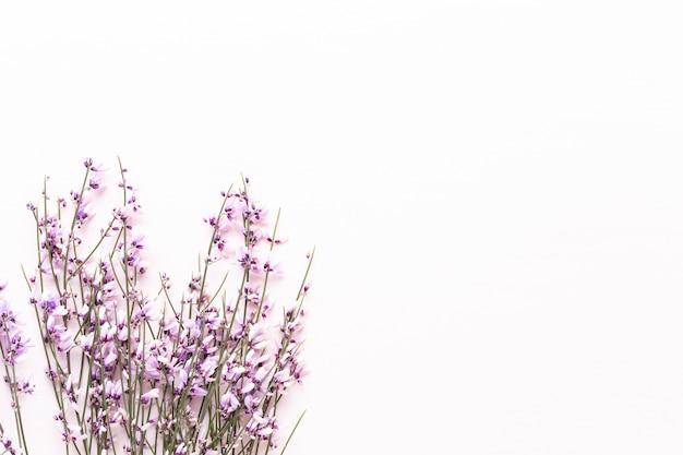 Blumen zusammensetzung. rosa blumen auf weißem hintergrund. ostern, frühlingskonzept. grußkarte, flachlage, draufsicht.