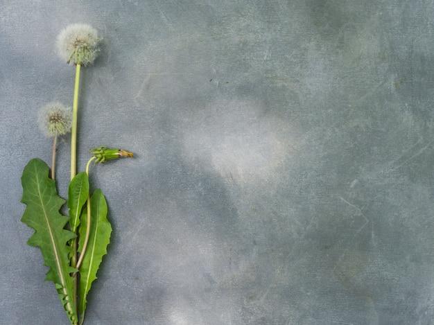 Blumenanordnung für löwenzahn auf einem grauen hintergrund.