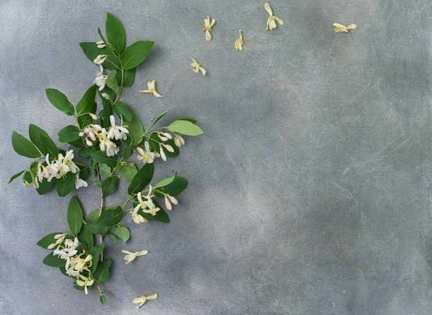 Blumenanordnung von einer blühenden akazie auf einem grauen hintergrund.