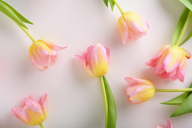 Blumenanordnung von rosa tulpen auf weißem hintergrund, tulpenhintergrundkonzept