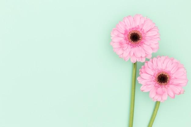 Blumenansicht der draufsicht mit grünem hintergrund