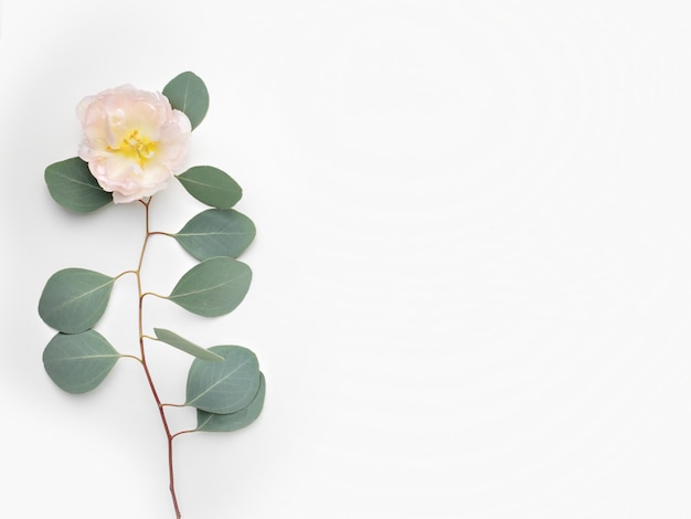 Blumenarrangement eukalyptusblätter und rosa blüten