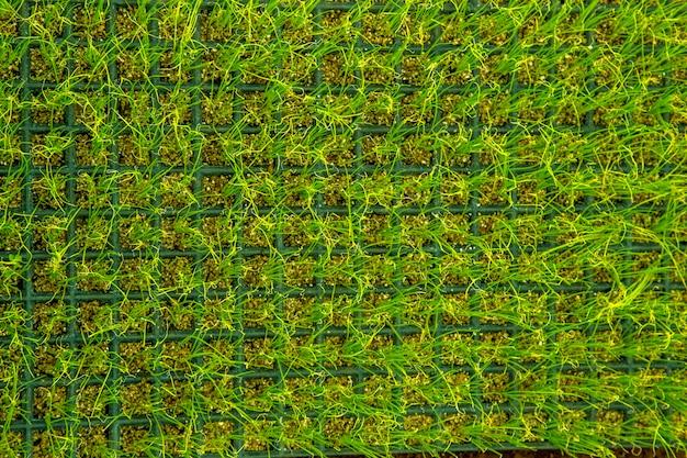 Blumenbeet-gemüse