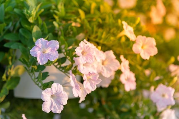 Blumenbeet mit bunten petunien