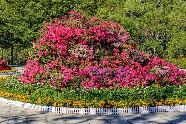 Blumenbeete auf der aussichtsplattform in der nähe des parks: